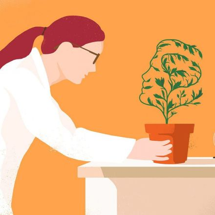 A Quiet Revolution in Botany: Plants Form Memories