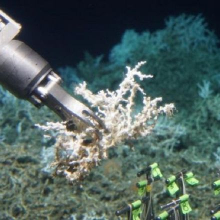 Scientists discover hidden deep-sea coral reef off South Carolina Coast