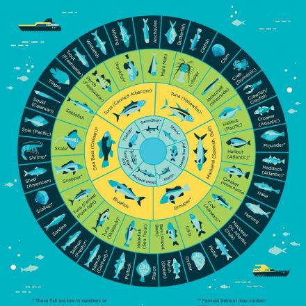 Which fish have the least mercury snapzu earth for Fish with least mercury