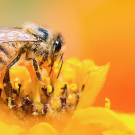 Numerical cognition in honeybees enables addition and subtraction
