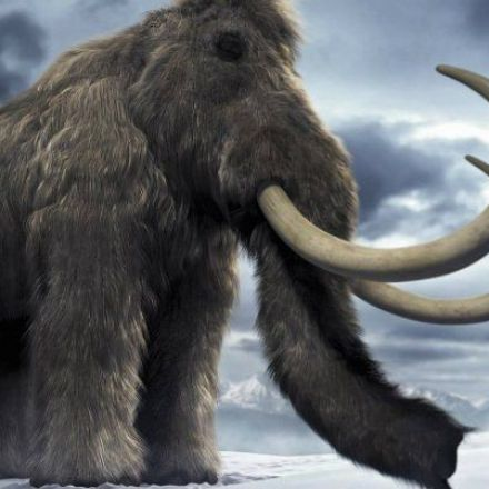 Harvard Scientists Are Cloning Woolly Mammoths to Save Humanity