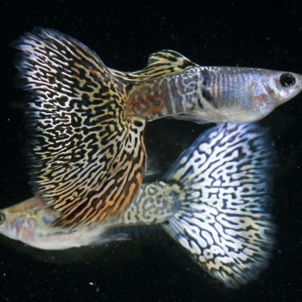 Fish have complex personalities, study suggests