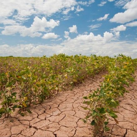 We Need to Completely Change Agriculture to Adapt to Climate Change