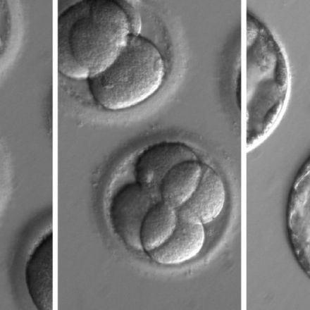 Human embryos edited to stop disease