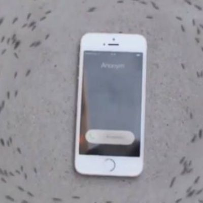 Mysterious video of ants circling phone