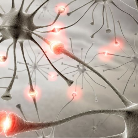 A gene linked to autism influences how neurons connect and communicate with each other in the brain.