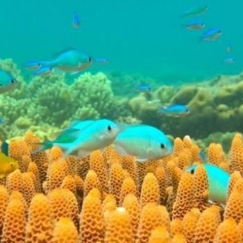 Australia offers cash for Great Barrier Reef rescue ideas