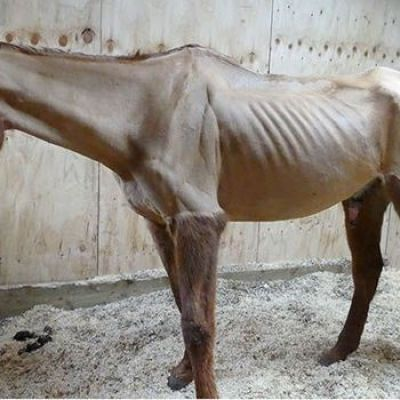 Horse died 'agonising' death after owner neglected him