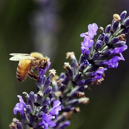 Ottawa to phase out pesticides linked to bee deaths