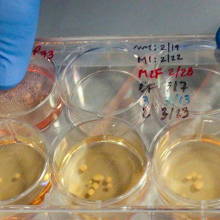 Exclusive: Neanderthal 'minibrains' grown in dish