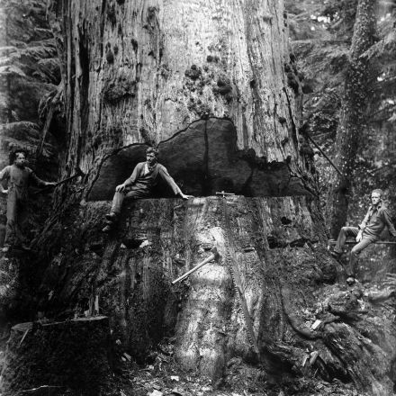 Early logging photos show the taming — and tarnishing — of Washington state's old-growth forests