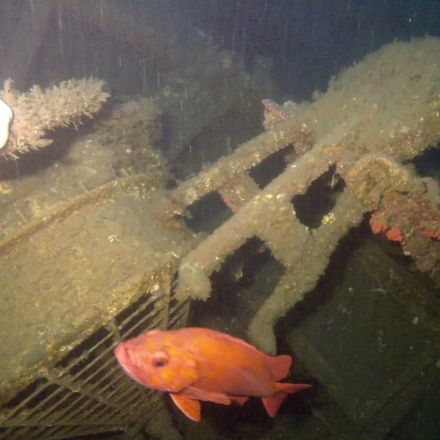 Historic shipwreck discovered off Southern California coast