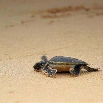 99% of These Sea Turtles Are Turning Female—Here's Why