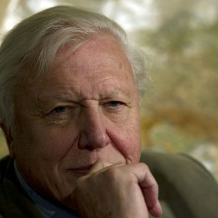 Naturalist David Attenborough earns his wings