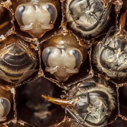 From egg to the air: 21 days of bee development condensed into one mesmerising minute