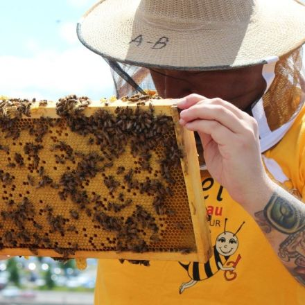 'Amazing change' for Montreal homeless men taking part in urban beekeeping program