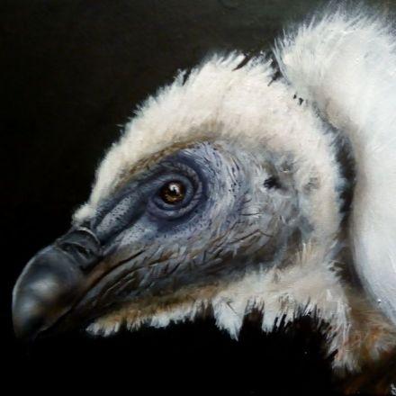 Griffon vulture by Martinus
