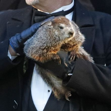 Groundhog Day 2019: Punxsutawney Phil Predicts An Early Spring