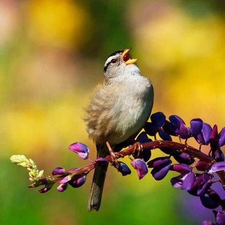Decline of migrating birds could be partly due to pesticides