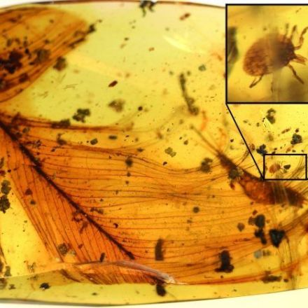 Tick that fed on dinosaurs found preserved on its host's fossilized feather