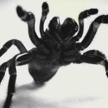 Scientists have spiders producing enhanced web that can hold a human