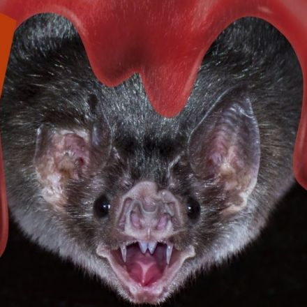 Bloody Amazing Facts About Vampire Bats