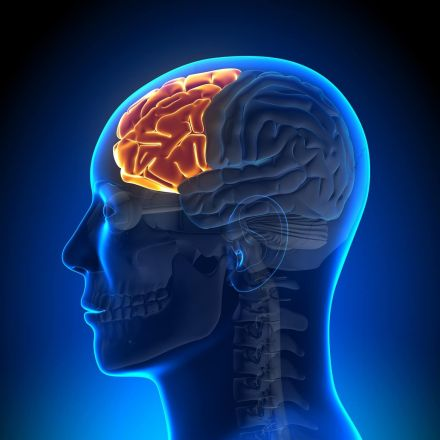Brain Volume May Be Tied to Emotionally Protective Traits