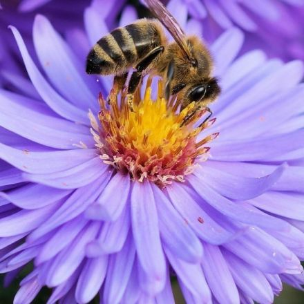 There's Now Very Strong Evidence We Really Are Killing Our Bees