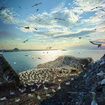 The Epic Journeys of Migratory Birds