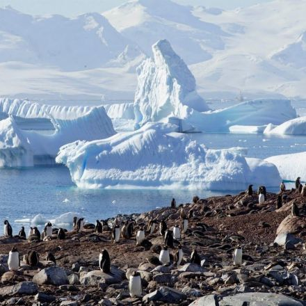 Journey to Antarctica: Seals, Penguins and Glacial Beauty