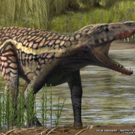 Unknown Ancient Reptile Roamed the Pyrenees Mountains