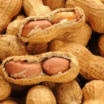 'Peanut Patch' Could Protect Allergy-Sufferers