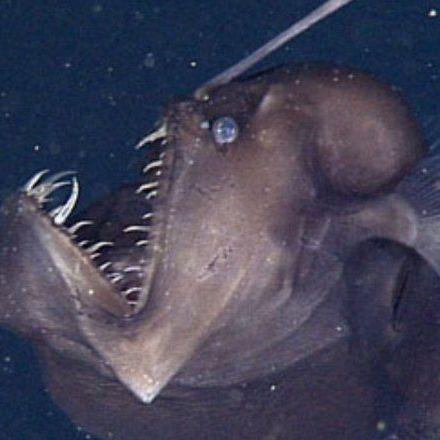 Rare Sea Monster Caught on Film