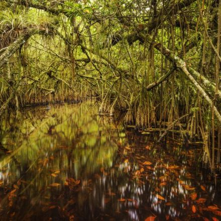 Florida Photographer Captures the Stunning Beauty of the Everglades