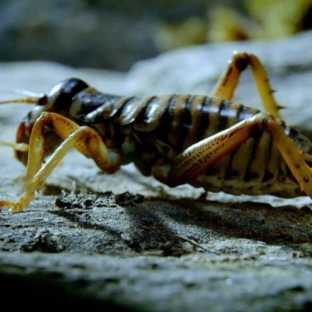 Insect Returns From The Dead - Wild New Zealand