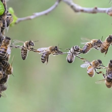 Vandals smash beehives, killing 500,000 bees