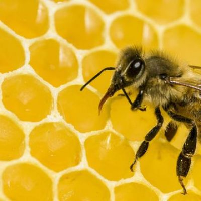 Bees Are Bouncing Back From Colony Collapse Disorder