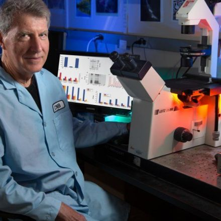 Cannabinoids remove plaque-forming Alzheimer's proteins from brain cells