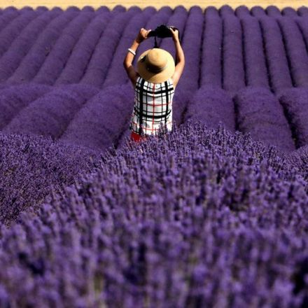 Lavender's Soothing Scent Could Be More Than Just Folk Medicine