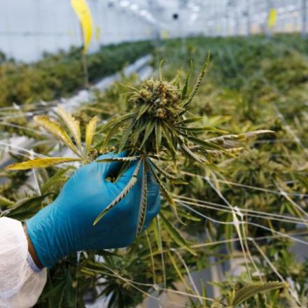'This ain't your mother's marijuana,' surgeon general warns on drug's danger