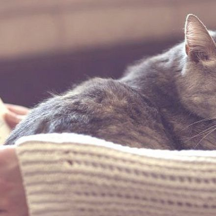 Here's Why Cats Knead You With Their Paws, According to Science