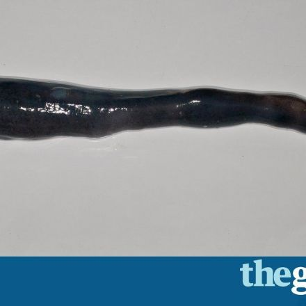 Bizarre bivalve: first living giant shipworm discovered in Philippines