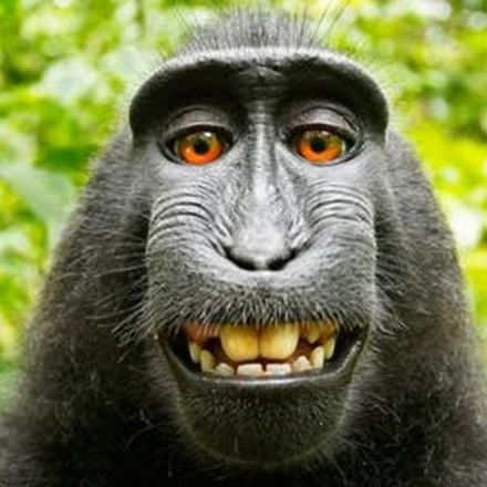 Monkey Selfie Case Gets Even Weirder, As The Monkey's 'Next Friends' Are In A Criminal Dispute With Each Other