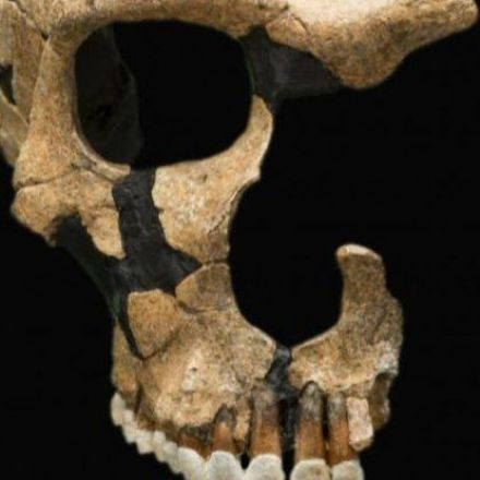Nine Species of Human Once Walked Earth. Now There's Just One. Did We Kill The Rest?