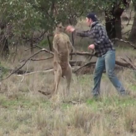 Man who punched kangaroo to save his dog calls police over animal-rights activist fear