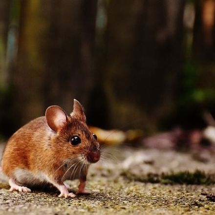 Researchers have reversed memory loss in mice by blocking an enzyme linked to Alzheimer's