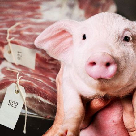 "Meeting a ""wonder pig"" made me reconsider eating meat"