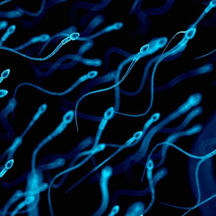 Female human body blocks weak sperm, scientists find