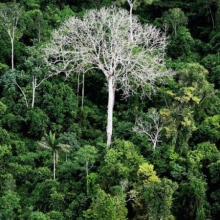 Study: Half of Amazon Tree Species Could Become Extinct