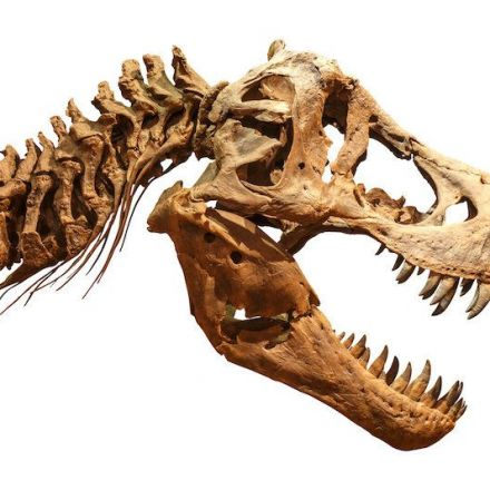 T. Rex had an air conditioner in its head, study suggests